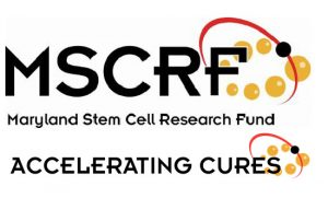 Maryland Stem Cell Research Commission Announces over $6 Million in Awards to Accelerate Cures